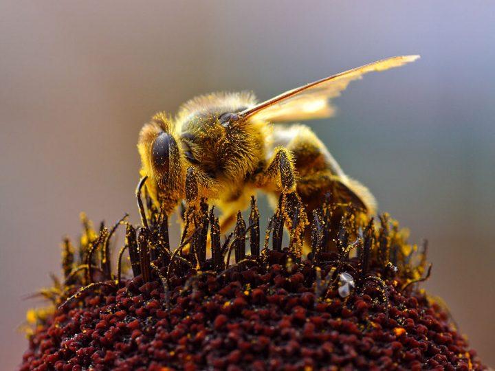 Ochrana včel, zvěře, vodních organismů a dalších necílových organismů při používání přípravků