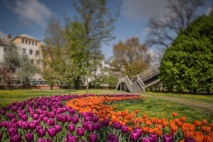 Flora Olomouc – letní etapa