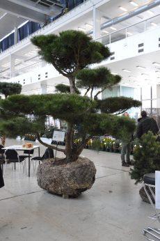 Zelená burza 2018 – ohlednutí za letošním ročníkem výstavy / fotogalerie / DSC_0038