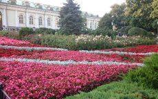 Flowers Expo 2017 Moskva / fotogalerie / DSC_0349
