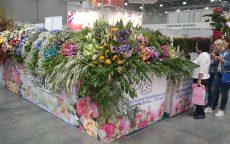 Flowers Expo 2017 Moskva / fotogalerie / DSC_0401