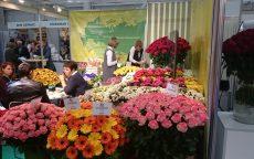 Flowers Expo 2017 Moskva / fotogalerie / DSC_0420