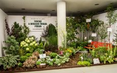 Jedlá zahrada = zahrada plná života / fotogalerie / IMG_6872