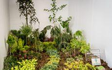Jedlá zahrada = zahrada plná života / fotogalerie / IMG_6874