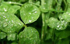 Zelené info